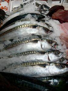 Cornish_mackerel_2
